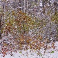 Первый снег---18 :: Владимир Холодный