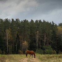horse :: Виталий Устинов