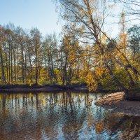 Золотая осень в парке 6 :: Виталий