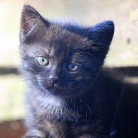 Котёнок. :: оля san-alondra