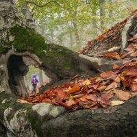 Осенней тропой ... :: Владимир КРИВЕНКО