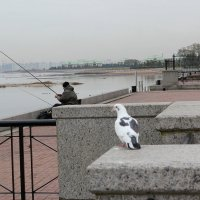 Ловись, рабка... :: Наталья Лунева