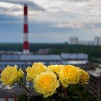 Главней всего погода в доме :: Владимир Безбородов