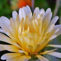 Удивительный цветок :: Валентина Пирогова