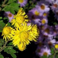 Пронзительная яркость осенних цветов :: Татьяна Смоляниченко
