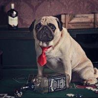 Собачьи истории. Зеленый змий :: Тата Казакова