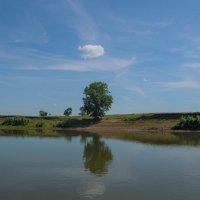 Дерево на берегу Белой :: Сергей Тагиров