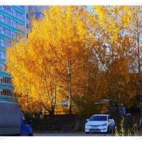 Золотые берёзы. :: Любовь Чунарёва