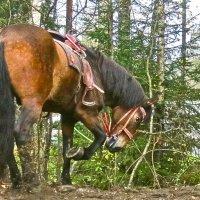 бьёт копытом конь :: Елена