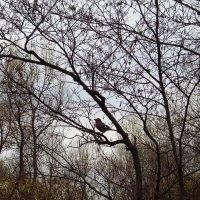 Так и не рассмотрел толком эту птичку :: Андрей Лукьянов