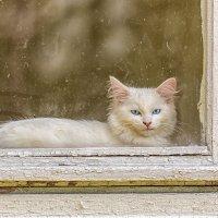 Старое окно :: Юра Викулин