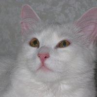 Я президент! Всего кошачьего мира!! :: Татьяна