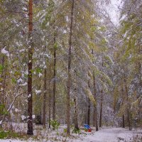 Первый снег---19 :: Владимир Холодный