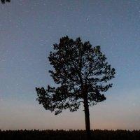 Звездное древо :: Славомир Вилнис