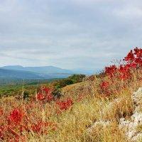 Осень в Крыму :: ирина )))