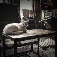 Цеховая кошка от Валентиныча :: Вадим