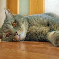 О чем думает кот? :: лиана алексеева