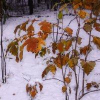 Первый снег---20 :: Владимир Холодный