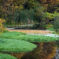 Природа соткала ковры на воде :: Валерий Голоха