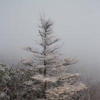 туман в лесу :: Наталья Литвинчук