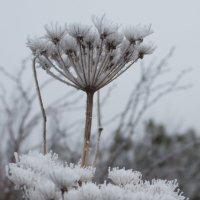 первый снег :: Наталья Литвинчук