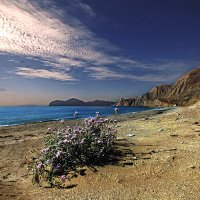цветы осенних берегов :: viton