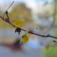 Осень :: Mitcu-Ray