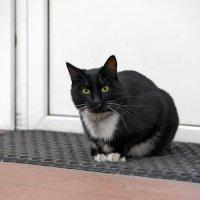 Просто уличный котик :: Константин Косов