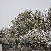 Снегопад на даче :: юрий Амосов