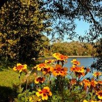 Взгляд на осень через бархотки :: Лидия (naum.lidiya)