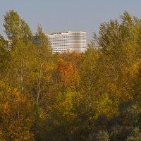 Уфимский отель сквозь осенние деревья :: Сергей Тагиров