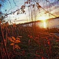 сквозь ветви золотые :: Валерия Воронова