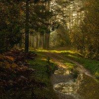 Утро в осеннем лесу :: Владимир