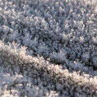Снежинок строй :: Александр Бабарика
