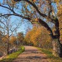 Золотая осень в парке 9 :: Виталий