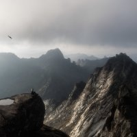 Птица :: Александр Бобрецов