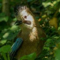 Ирокез в лесу :: Павел Руденко