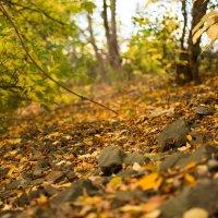 Осень в Славянске :: Михаил Сандарьян