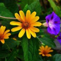 Цветочное... :: *MIRA* **