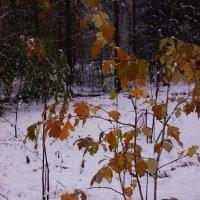 Первый снег---21 :: Владимир Холодный