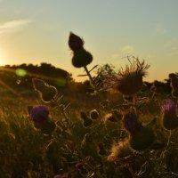 на заходе солнца :: Наталья Замятина