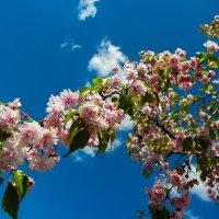 Весна... :: Алла Рыженко