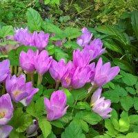 Осенние цветы :: Michelen