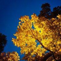 Осень фото 2 :: Genych