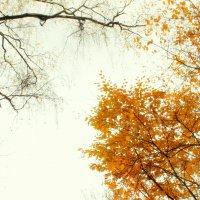 БУНИНСКАЯ Осень :: Арина Дмитриева