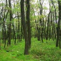 Середина осени. В окресностях Ростова многие деревья и трава еще зеленые :: татьяна