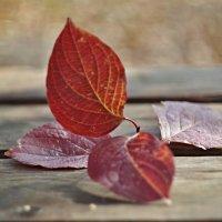 последние листья... :: юрий иванов