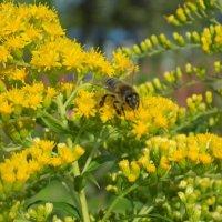 Пчелка :: Виктория ***