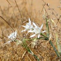 Если вы хотите увидеть красоту природы подойдите к ней близко :: vasya-starik Старик
