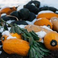 Замерзший урожай :: Evgenija Enot